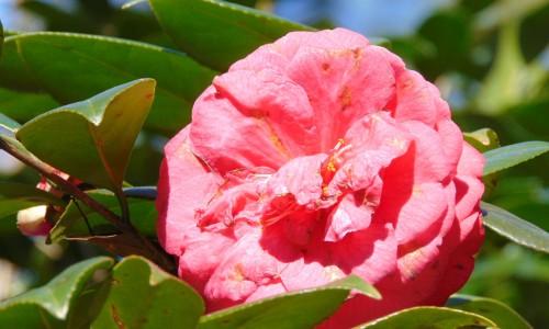 16 Camellia Garden Dothan Area Botanical Gardens